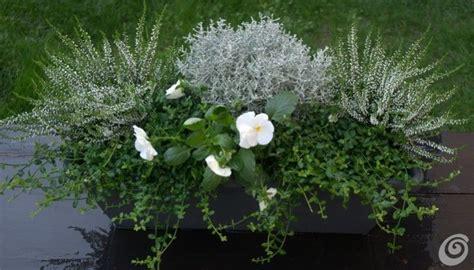 vasi per davanzali oltre 20 migliori idee su fioriere per davanzale su