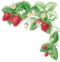 all about growing strawberries organic gardening