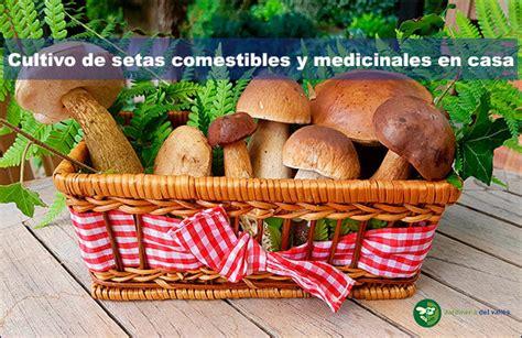 cultivo de setas en casa cultivo de setas comestibles y medicinales en casa