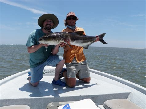 how do cobia boats rate cobia fishing charters charleston fish finder