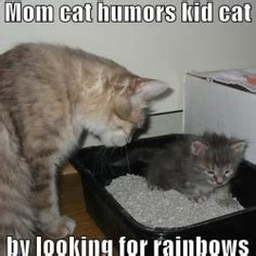 Cat Mom Meme - 1000 images about pee your pants funny on pinterest