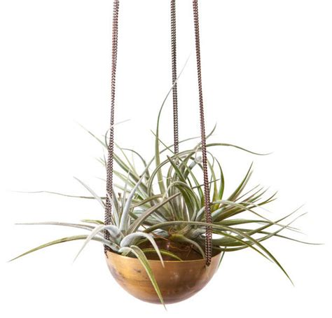 Hanging Indoor Planter by Gold Medal Hanging Planter Modern Indoor Pots And Planters By Dot Bo