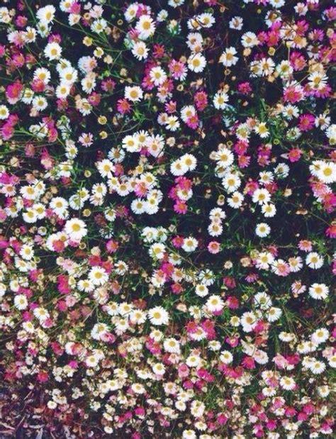fiori bianchi per te canzone prato fiorito