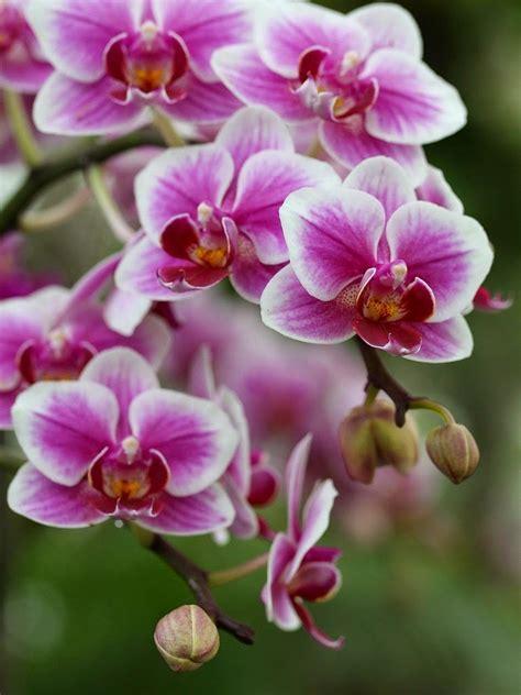 imagenes de flores hermosas orquideas orquideas imagenes