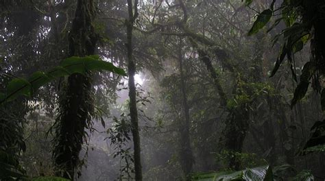 top 10 largest forests in the world listsurge