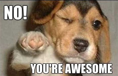 No You Are Meme - no you re awesome dog memes pinterest awesome and