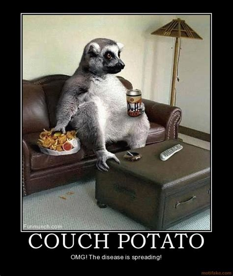 like a couch potato couch potato lemur humor work pinterest humor couch