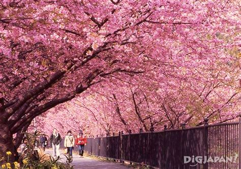 Wisteria Tunnels Tokyo by 100 Flower Tunnel Japan Blog 7 Places In Japan You
