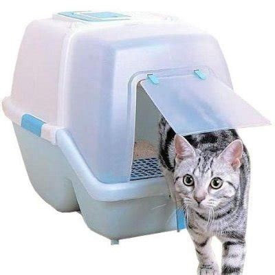 how to your to use a litter box how to guide to get your cat use the litter box ibritt