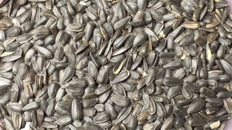 seed and peanuts