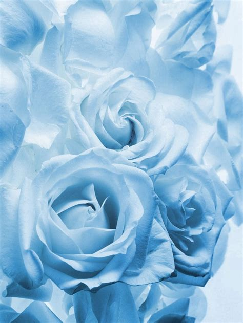 light blue and white roses 457 best images about color pastel blue azul pastel