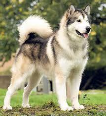 Daftar Sho Kucing pameran anjing daftar dokter hewan pet shop penyakit