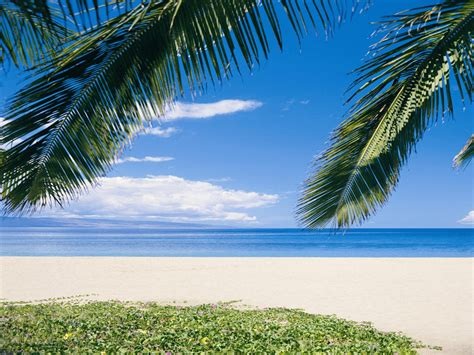 best photos of beach theme templates free beach party
