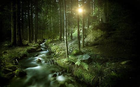 wallpaper of dark forest dark forest wallpapers hd free 318822 imgstocks com