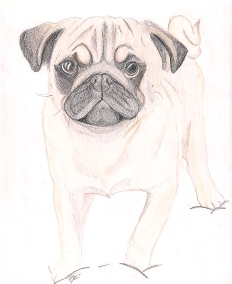 pug sketch pug drawing by therainbowdalek on deviantart