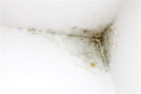 Getting Rid Of Mould On Ceiling by How To Get Rid Of Mould On Walls Mildew On Walls