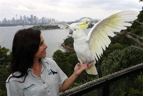 bird show keeper with cockatoo taronga