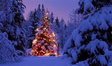 some northwest christmas for du democratic underground