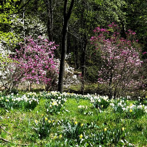 Garden Nh Woodland Gardens New Hshire Garden Solutions