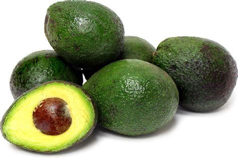 Alpukat Fuerte By Golden Effort gwen avocados information and facts
