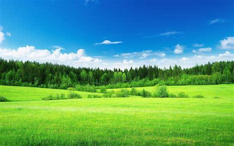 wallpaper pemandangan alam hijau kumpulan foto pemandangan terkeren indah