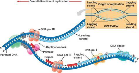 dna replication diagram 2 what are retroviruses retroviruses