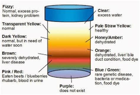 what color is healthy what color is healthy urine garage article
