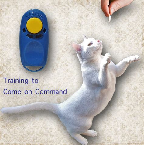 how to to come on command a bit of cat is