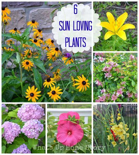 6 sun loving plants summer garden in the garden pinterest