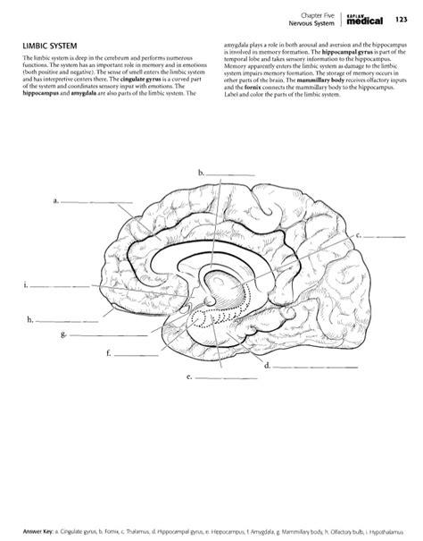 kaplan anatomy coloring book ebook kaplan coloring book anatomy anatomia dibujos
