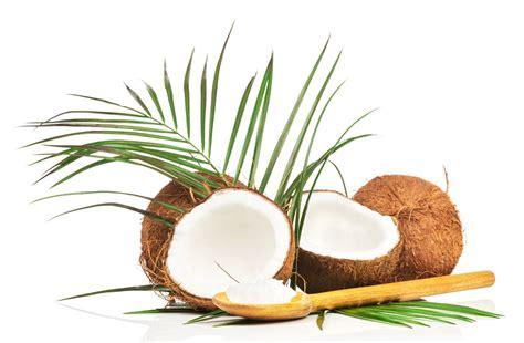 alimentazione candida albicans infezioni candida albicans olio di cocco