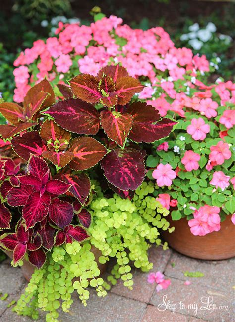 plant beautiful container gardens skip   lou