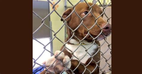 Pratt By Heroinestore shelters in nh town overwhelmed with pets abandoned by heroin www wsbtv