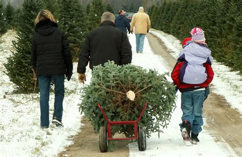 christmas tree farms arlington heights chicago il