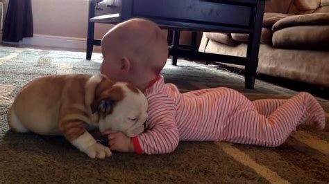 puppy with baby baby bulldogs pictures and baby bulldogs are just the cutest