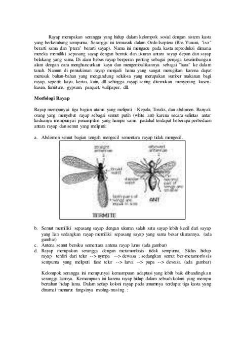 Biologi rayap