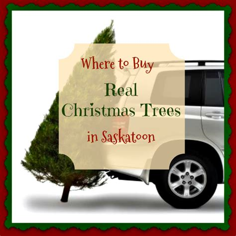 where to buy a real christmas tree in belfast where to buy real trees in saskatoon