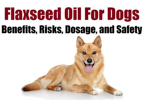 fish dosage for dogs flaxseed for dogs benefits risks dosage and safety krill for dogs