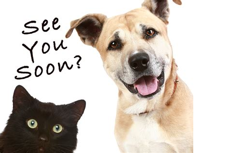 adoption events petsmart national adoption event charleston animal society