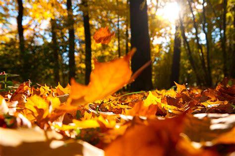 fondos de pantalla bosques otono en gran plano follaje