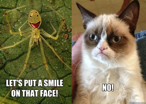 Cat Meme Faces - image gallery happy cat funny faces