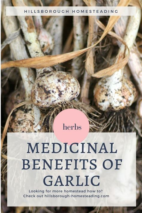 7 of the most liberating benefits of homesteading from desk jockey to survival junkie 280 best homesteading home remedies images on butter eat healthy and