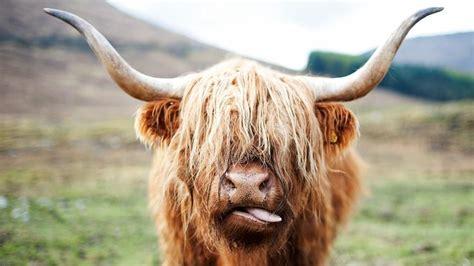 ox bad wacky weekend animal faces