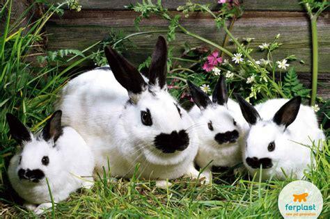 gabbia dei conigli come avviene la riproduzione coniglio ferplast