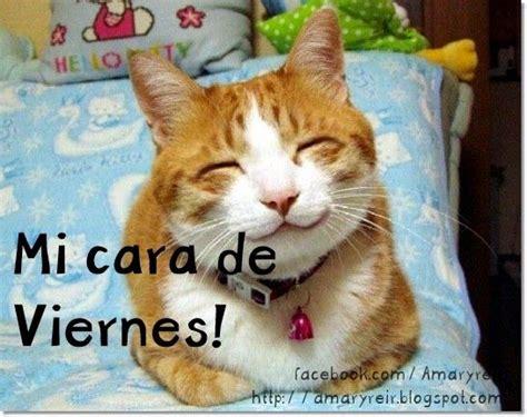 imagenes viernes gatos tu cara de viernes jajajaja imagenes gift y mas