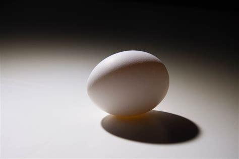 Ll4 Studio Light Basics The Egg Adv 2340 Digital Egg Lights