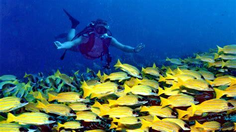 roatan dive water activities in roatan