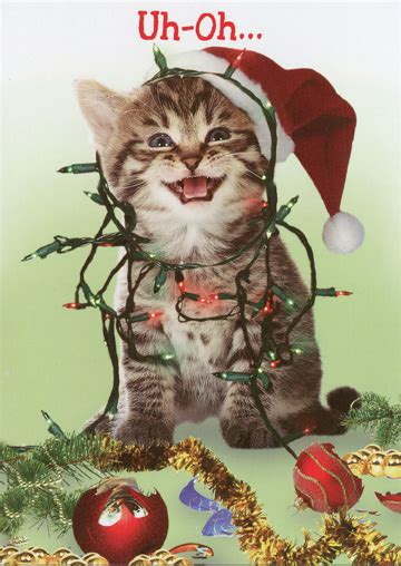merry catsmess funny humorous christmas card  recycled paper