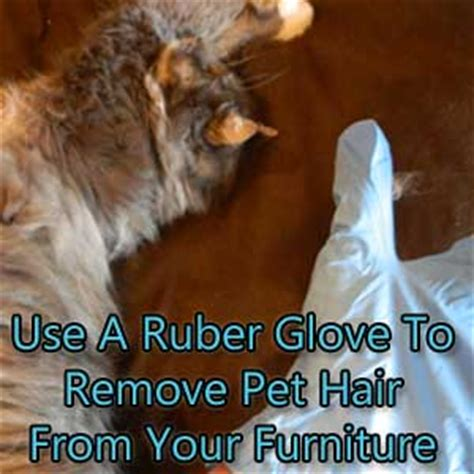 removing dog hair from couch easy trick to remove pet hair from furniture carter s carpet