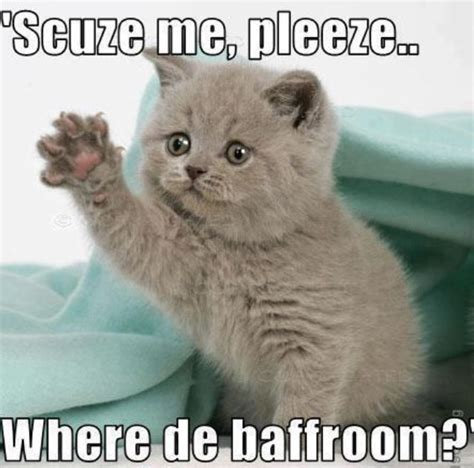 Cute Kitten Memes - best 25 cute kitten meme ideas on pinterest